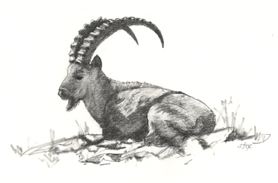 ibex-billy.jpg