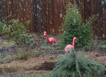 snow-and-flamingos.jpg