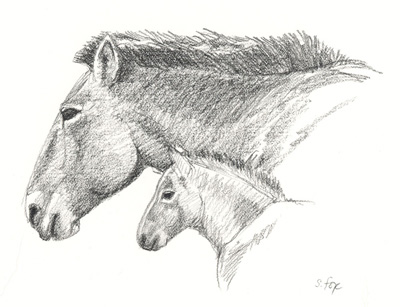 takhi-mare-and-foal-heads-blog.jpg