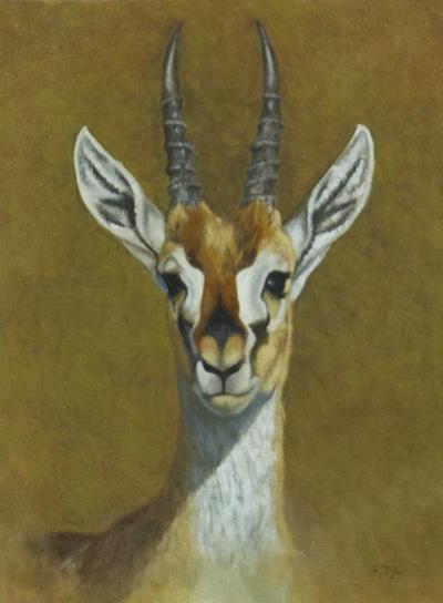 grants-gazelle.jpg