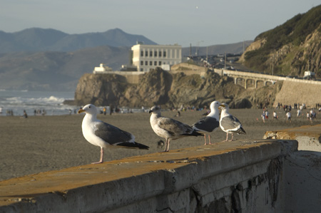 gulls-and-cliff-house.jpg