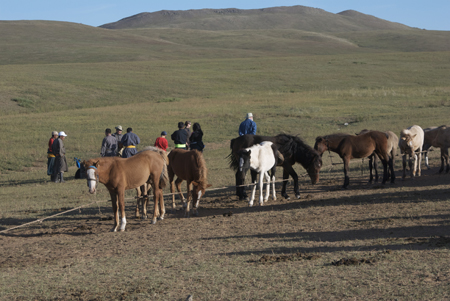Foals lined up for branding