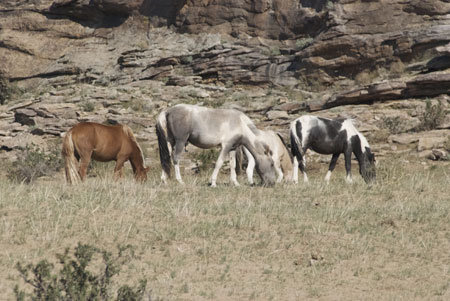 Horses grazing near ger camp