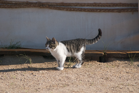Young cat at Red Rock Ger Camp, Ikh Nartiin Chuluu Nature Reserve