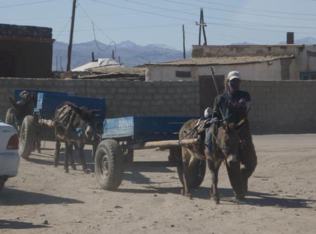 Donkey carts, Hovd