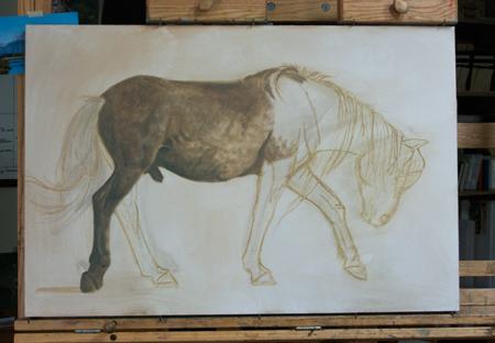 Mongol Horse stallion