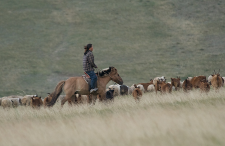 Herding goats near Hustai National Park
