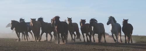 Horses, Arburd Sands