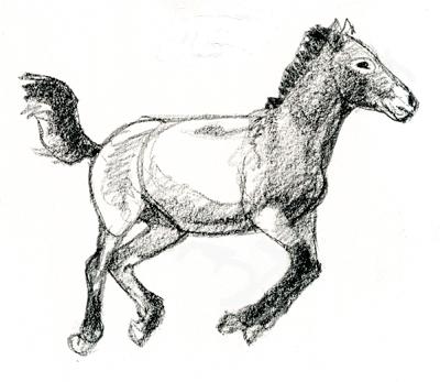 takhi-foal-1