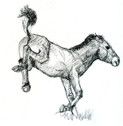 takhi-foal-2