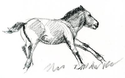 takhi-foal-4