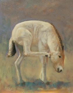 Takhi Foal Scratching