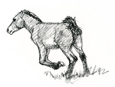 takhi-foal3