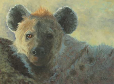 Interrupted Nap (Spotted hyena)