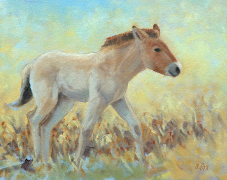 Takhi Foal; giclee on archival paper