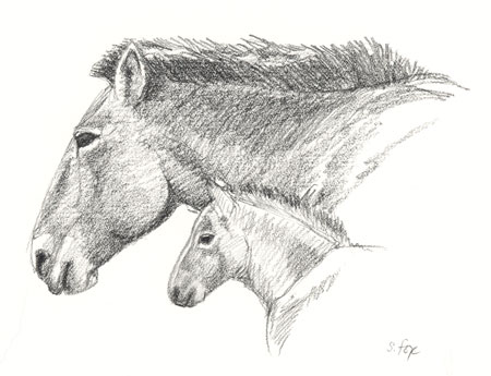 Takhi mare and foal; charcoal pencil on cold-press bristol paper