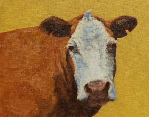"Hereford Study  oil  8""x10"""