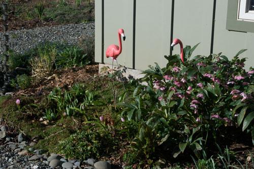 Species tulips, hellebores, flamingos