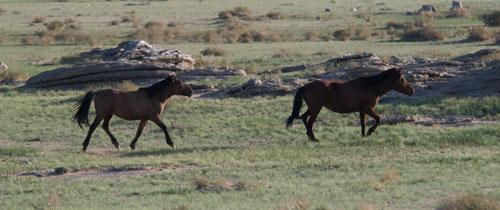 ikh-nart-horses