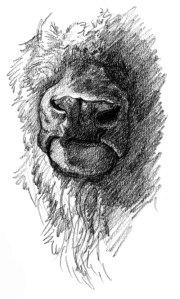 bison-nose