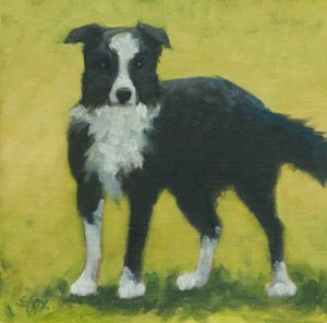Border Collie  oil on canvasboard 8x8