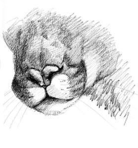 cougar-nose1