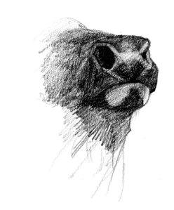 elk-nose
