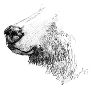 grizzly-nose