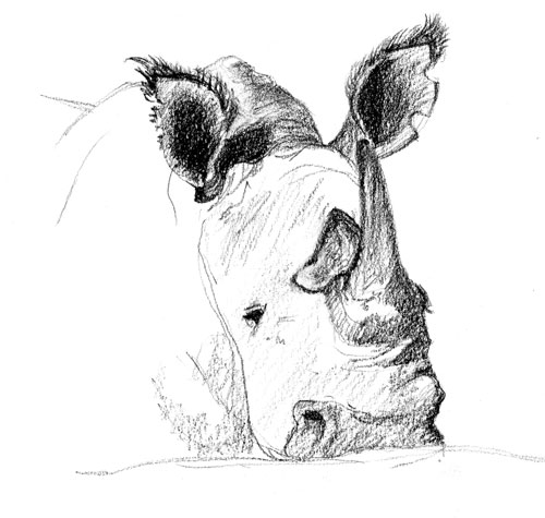 White Rhino, Lewa Downs Conservancy, Kenya 2004