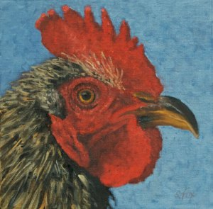 Rooster 12x12 oil on canvasboard