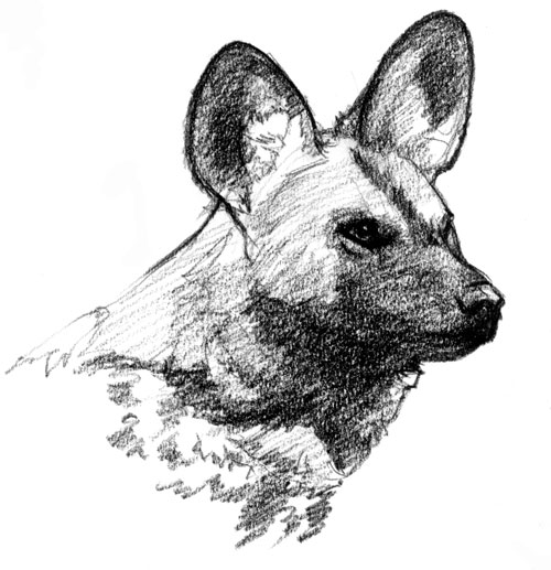 african wild dog coloring pages - photo#31