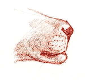 young-lion-muzzle