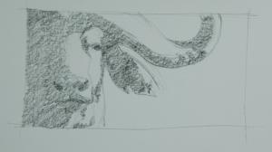 buffalo-2