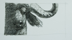 buffalo-31