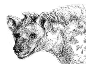 hyena-head
