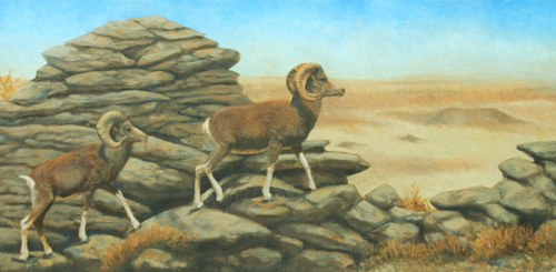 Ikh Nartiin Chuluu Argali  15x30 oil (price on request)