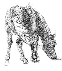 mongol-horse-grazing
