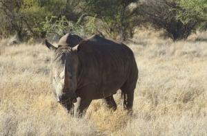 rhino-photo