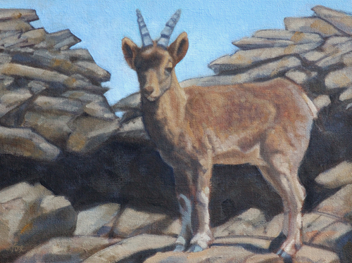 Young Ibex 9x12 oil