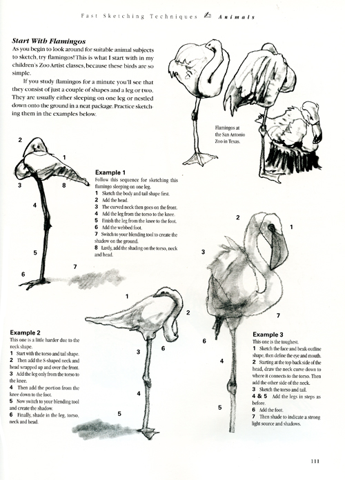 Instruction on how to work at zoos sketching animals