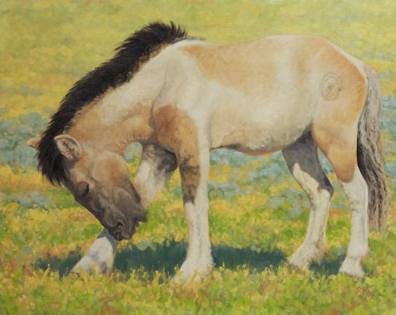 Mongol Horse #3- Young Stallion 16x20 oil on canvasboard