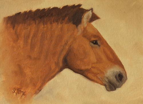 Takhi Stallion Head Study 6x8 oil on canvasboard
