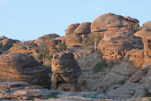 Aspens amid the rocks, early evening, Baga Gazriin Chuluu Nature Reserve