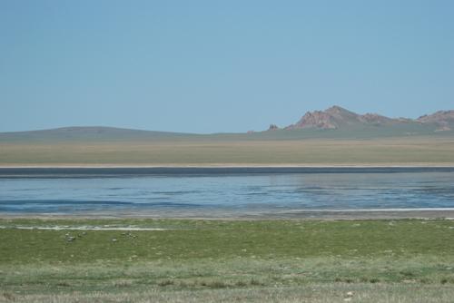 Small lake with demoiselle cranes