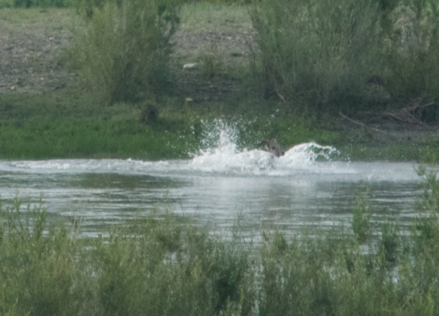 Detail: the splash