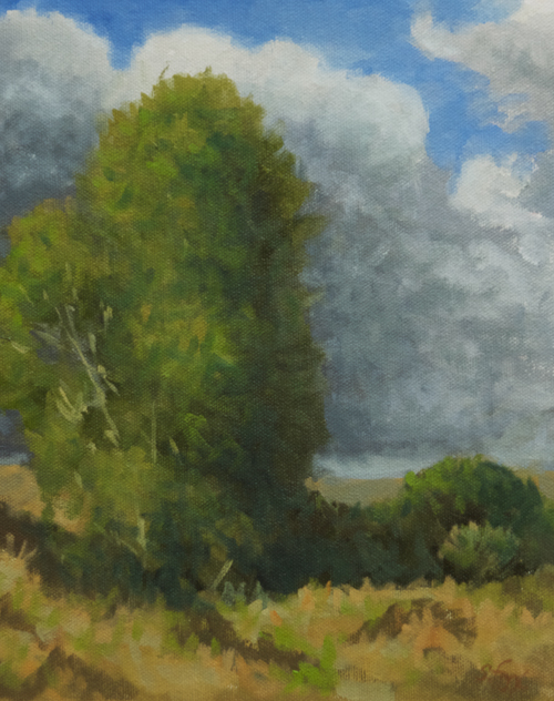 "Idaho Cottonwoods   10x8""   oil on canvasboard"