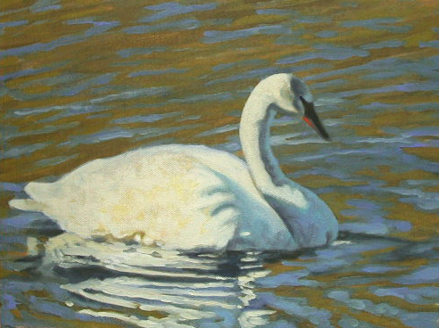 "Trumpeter Swan   9x12"" oil on canvas"