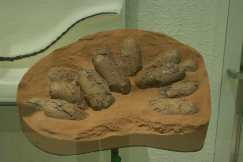 Fossil dinosaur eggs; they had one that you could touch, too!