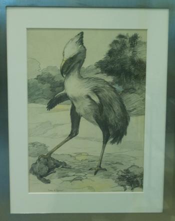 Drawing by J.B. Shackleford