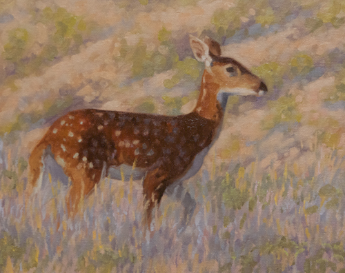 "Young White-tail Deer 8x10"" oil on canvasboard"